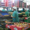 Las cooperativas agroalimentarias generan ms de 3100 empleos directos