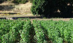 Asaja Extremadura La decisin del laudo arbitral llevar al lmite al campo extremeo