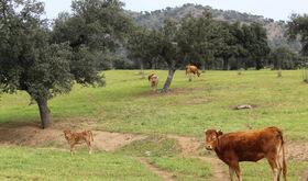 UPAUCE pide la actuacin del seguro de sequa en pastos ante la escasez de lluvias