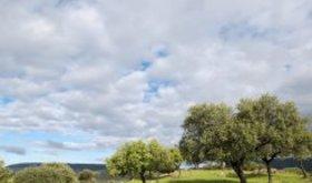 Junta recibe 212 solicitudes ayudas para fomento economa verde en explotaciones agrarias