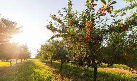 Junta implanta red de asesoramiento en produccin ecolgica en tres zonas de Extremadura