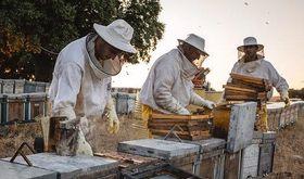 La Eurocmara pide una ley que proteja a las abejas de los pesticidas