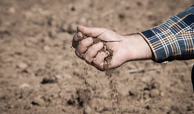 Agroseguro inicia pago indemnizaciones por sequa cereales con 13 millones a Extremadura