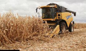 Cooperativas Agroalimentarias estima una cosecha cereales de 883083 toneladas en regin