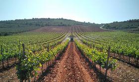 Organizaciones agrarias se concentrarn el 29 de enero en Agroexpo de Don Benito