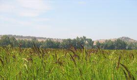 APAG Extremadura Asaja pide soluciones eficaces para garantizar el futuro del arroz