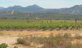 9 millones euros en ayudas para reestructuracin y reconversin del viedo en Extremadura
