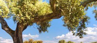 Junta incorpora novedades en solicitudes de la PAC en pro de ayudas agricultura ecolgica