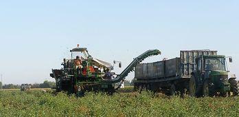 Nivel de ocupados del sector agrario alcanza hasta un 12 del empleo global en Extremadura