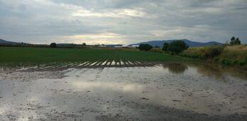 APAG Extremadura Asaja reclama a la Junta crear un fondo de contingencia ante tormentas