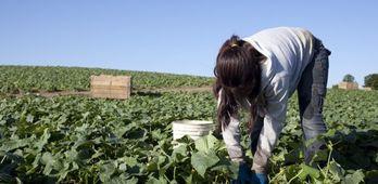 Asaja pide a empresarios agrcolas que este martes paren actividad agraria en toda regin