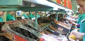 Extremadura cuarta CCAA donde ms han aumentado los ocupados un 53