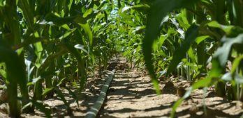 Desarrollo Rural resuelve ayudas para implantacin de sistemas de riego por 3 millones