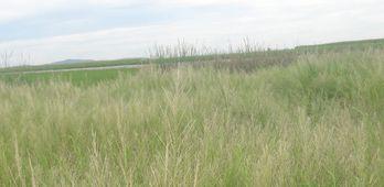 La Unin Extremadura alerta de la destruccin de arrozales en la regin