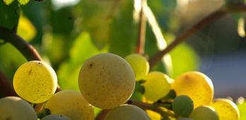 La Junta anima a los productores y bodegueros de la DOP Cava a renovar rganos gobierno