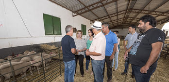 La Diputacin de Cceres entrega 173 ovejas Merino Precoz
