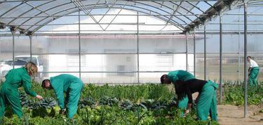 El DOE publica el decreto sobre concesin de incentivos agroindustriales