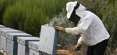 UPAUCE dice que ministerio recoger todas las demandas del sector sobre etiquetado miel