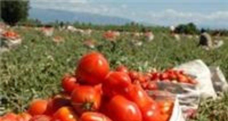 La consejer a de agricultura colaborar con la asociaci n for Asociacion de cultivos tomate