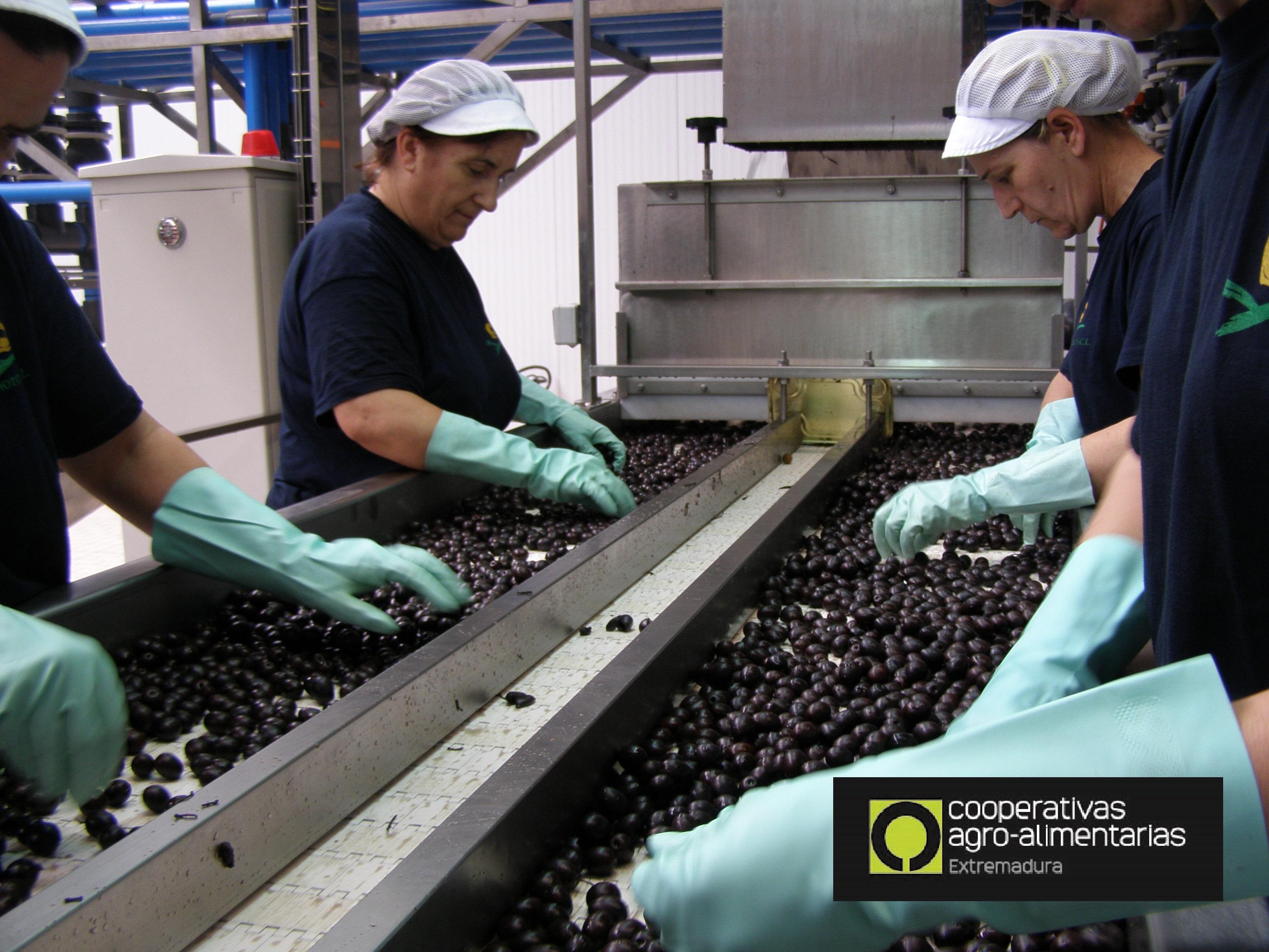 Cooperativas Agroalimentarias Economía Social