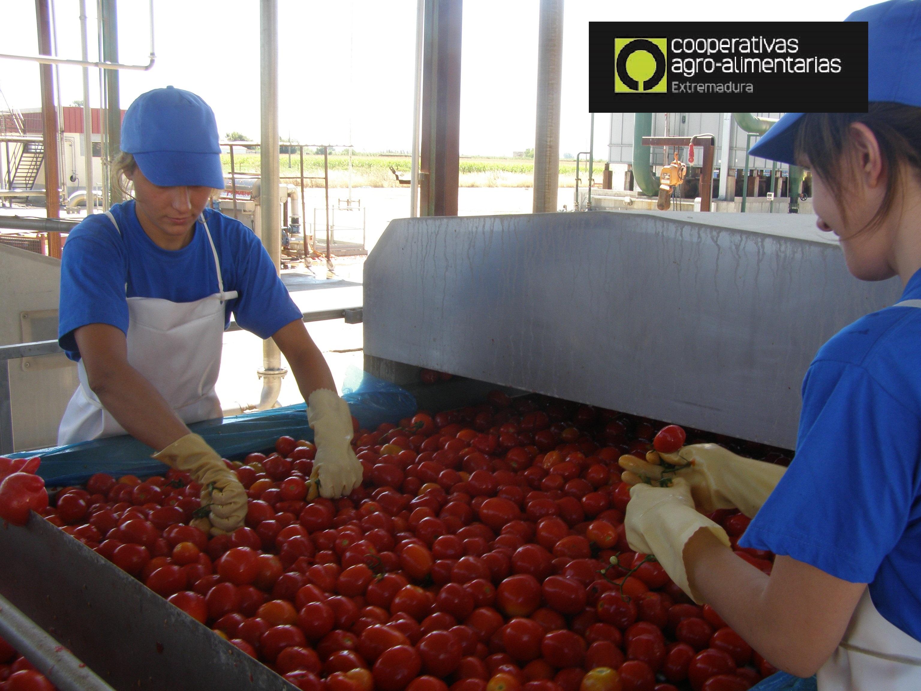 Cooperativas Agroalimentarias oportunidad para Jóvenes