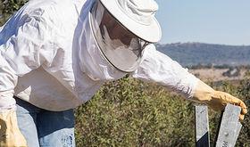Asociacin Apicultores Extremeos estima Produccin de miel de primavera ser muy baja