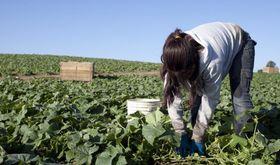 UPAUCE Extremadura llama al sector agrario a movilizarse en defensa de la igualdad