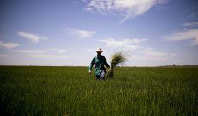 Agricultura pone en valor la arquitectura verde de la PAC post 2020