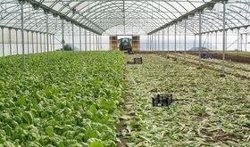 Ministerio de Agricultura ya ha pagado 6637 millones de la PAC de 2018 454 millones ms