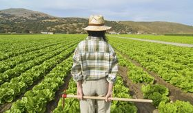 La Unin urge a Junta pedir a Europa 160 millones para prstamos a jvenes agricultores
