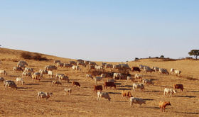 La Unin recurrir datos de Agroseguro para calcular indemnizaciones del seguro de pastos
