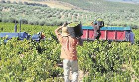 Ruptura en la negociacin del convenio del campo de Extremadura