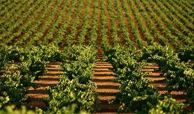 El Ministerio de Agricultura ampla en 20 das periodos de suscripcin del seguro agrario