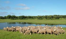 Corderex analiza en unas jornadas la nueva PAC orientada al sector ovino