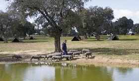 La Junta abona 43 millones de euros del pago y rgimen de jvenes agricultores de la PAC