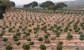 La ONGD extremea Paisaje Ecologa y Gnero premiada en varios certmenes estatales