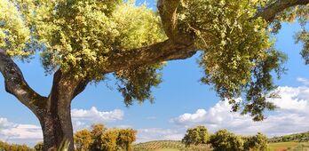 UPAUCE Extremadura valora la sentencia del TUE sobre los pastos