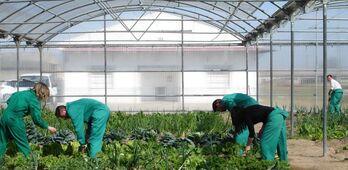 Trabajadores agrarios por cuenta ajena inactivos podrn diferir pago cuotas enero a abril