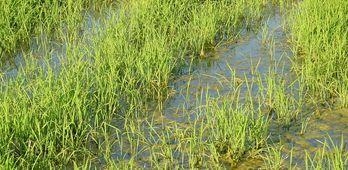 UPAUCE se felicita por la aprobacin definitiva de aranceles para importaciones de arroz