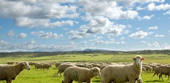 Resolucin de ayudas a mejora en bioseguridad de explotaciones extensivas bovino y caprino