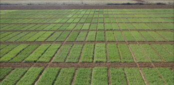 CICYTEX muestra a cerealistas sus ensayos de cereales de inverno y variedades de espelta
