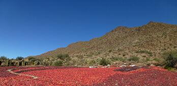 UPA pide que los contratos del pimentn se firmen en marzo