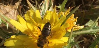 Apicultores extremeos alertan de la negativa campaa de miel y polen de este ao