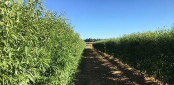 Jornada del cultivo del almendro en seto en Extremadura