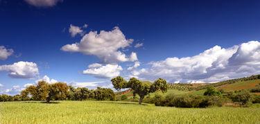 Un proyecto de Fedexcaza y APAG Extremadura Asaja apuesta por la revaloracin de la dehesa