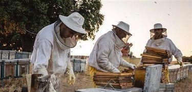 UPAUCE advierte de que las importaciones a bajo precio siguen bloqueando la venta de miel