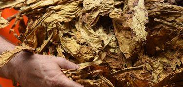 UPAUCE Extremadura pide a Cetarsa mejoras que ayuden a impulsar el sector tabaco