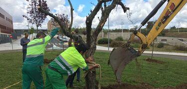 Nmero de trabajadores afiliados a Seguridad Social en Extremadura creci un 22 en 2018