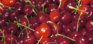Las primeras cerezas certificadas del Jerte salen al mercado