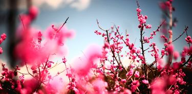 Extremadura registrar una primavera moderadaintensa en cuanto a polen